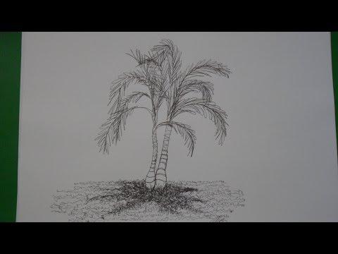 Dibujo De Una Sola Línea. Dibujo De Una Palma. (dibujo De Palmas)
