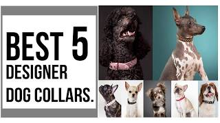 Designer Dog Collars For Your Puppy & Dog || Best 5 Designer Dog Collars In 2019 || designer collars