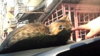 Fanny - Cat Fever