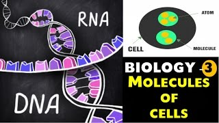 Molecules of Cell , RNA , DNA Etc Biology Chapter -3 for SSC , UPSC , Other Govt exams