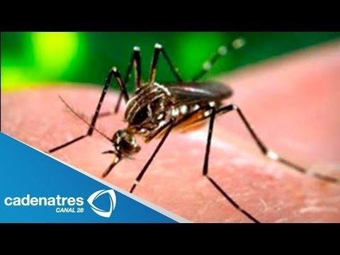¿Qué es el virus de Chikungunya?