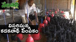 Kadaknath Poultry Farming Success Story | Nela Talli | hmtv News