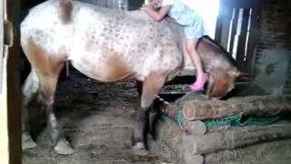 Adorable Little Girl Climbs on Horse Backwards