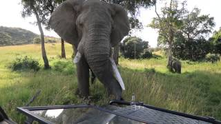 A friendly elephant .....