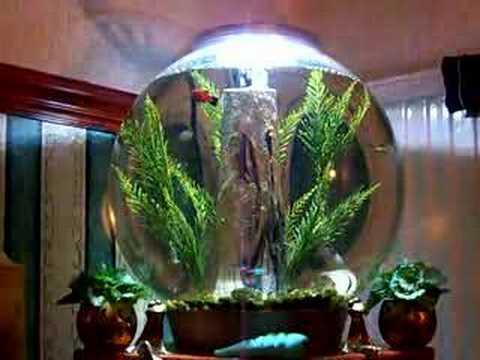 BIORB 30 LITRE FISH TANK - YouTube