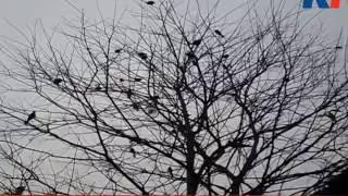 মিষ্টি মধুর কিচির মিচির পাখির ডাক শুধু শুনতেই মন করে
