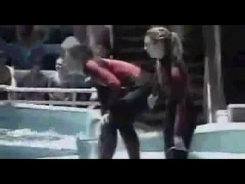 Momento do ataque da orca a treinadora em Orlando http://brmaster.net/