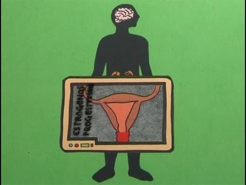 Cómo funciona el aparato reproductor femenino