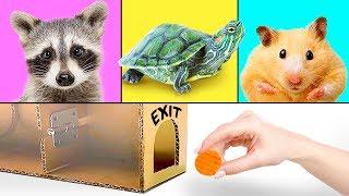 3 Hilarious Pets And 3 Smart Crafts for Kids