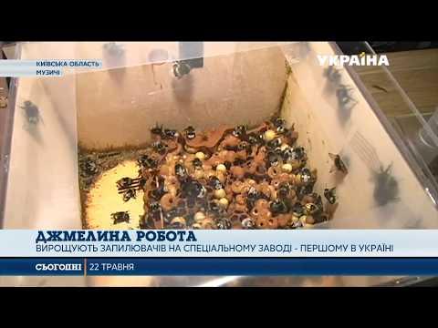 Українські фермери беруть на озброєння нові технології запилення рослин