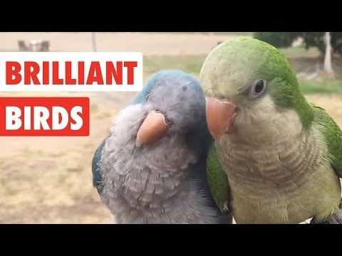 Brilliant Birds | Funny Bird Video Compilation 2017