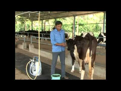 Dairy Farms in Tamil Nadu(India) -BDF(part 4 of the interview)