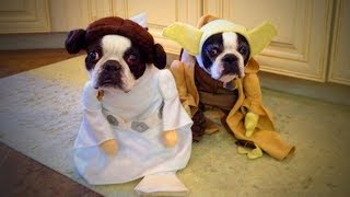 Cute Pets 🐱🐶 Lovely Cats And Dogs Wearing Costumes (Part 2) [Funny Pets]