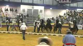 CABALLOS COLOMBIANOS (2)