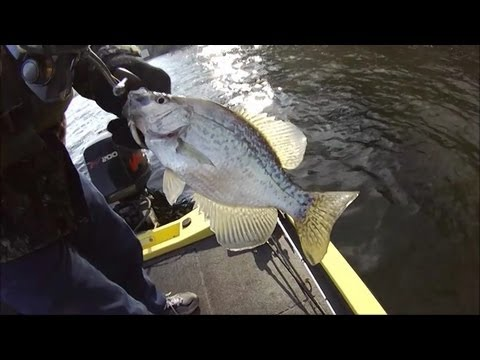 Chicken Coop Crappie Toledo Bend Jan 7 2013