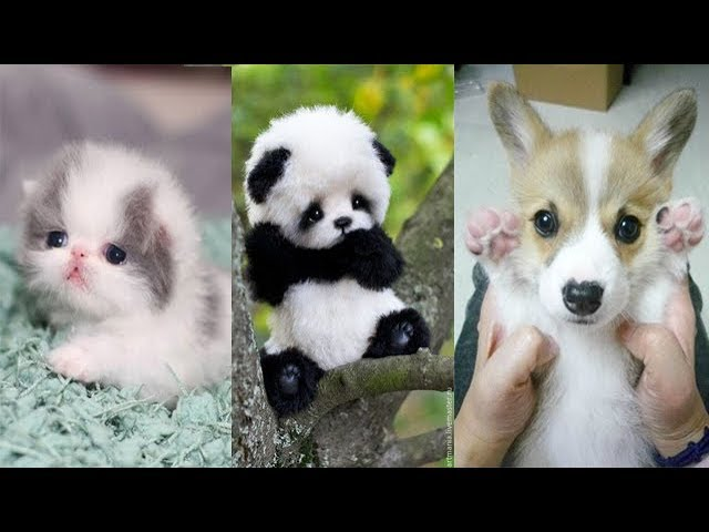 Cute baby animals Videos Compilation cute moment of the animals - Soo Cute! 7