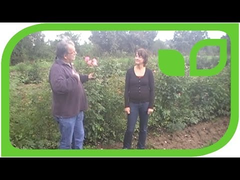 Delbard Rosen - Besuch In Malicorne