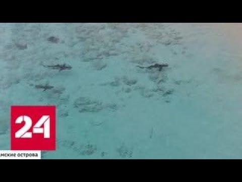 На Багамах россиянин спас ребенка от акул - Россия 24