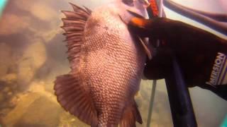 Spearfishing Ныряние Ко Чанг.mp4