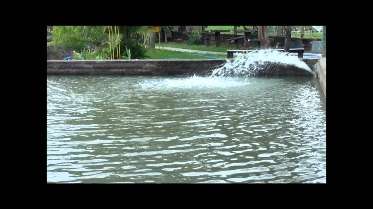 Como airear un tajamar de 100 x 25mtrs para for Impermeabilizante para estanques de agua