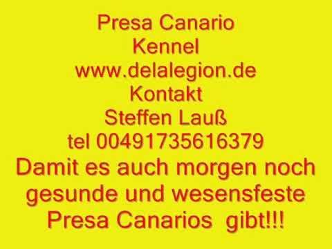 PCE e.V. El Fallecimientos Cosa Nostra Perro de Presa Canario Schutzhunde