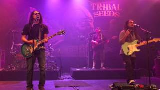 Tribal Seeds In Your Eyes Live At The Observatory North Park In San Diego 12 11 15