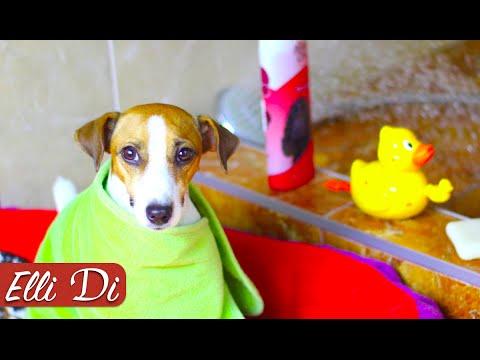 КАК ПОМЫТЬ СОБАКУ - ГРЯЗНУЛЮ   УХОД ЗА СОБАКОЙ   Elli Di Собаки