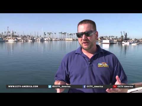 El Nino weather pattern causing weird marine life incidences