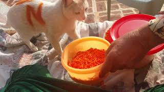 Funny Compilation,Funny Cat Eating,Crispy,Nimko,yummy,yum,Cute Kittens Fail Videos Kitty Dec,13,2018