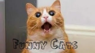 Funny Videos 2014 - Funny Cats Compilation - Funny Animals