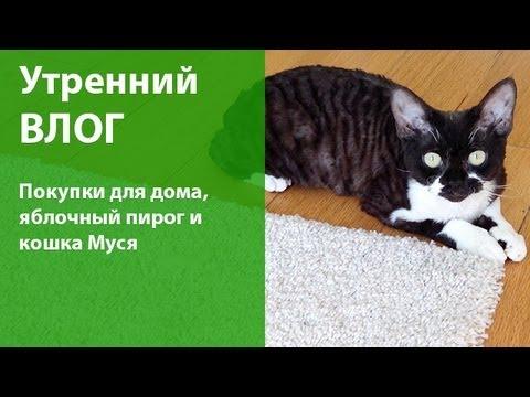 Влог: покупки для дома, яблочный пирог, кошка Муся