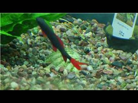 Fish tanks aquarium maintenance how to clean rocks for Best way to clean a fish tank