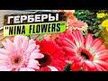 """Герберы от тепличного комплекса """"NINA FLOWERS"""". Часть 2"""