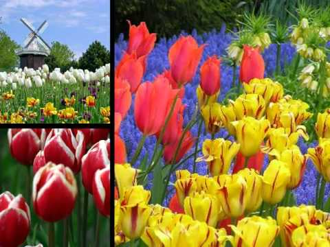 Tip-Toe Through The Tulips With Me by Chet Atkins tab