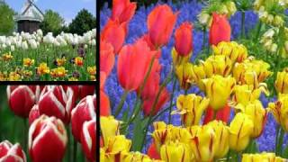 "Chet Atkins ""Tiptoe Through The Tulips With Me"""