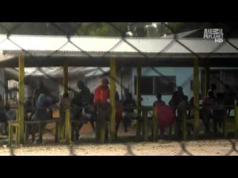 Solomon Islands Blood Dolphins Part 1