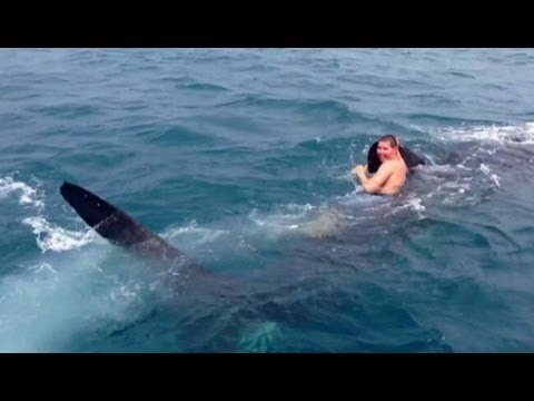 Teen Rides Shark Video: Debate Surfaces After Teen Rides on 30-Foot Shark's Back
