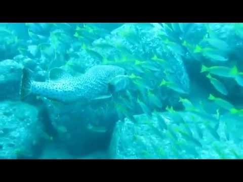 SCUBA diving in Trincomalee Sri-Lanka