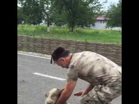 Медведь любимый зверь Чеченцев после Волка !