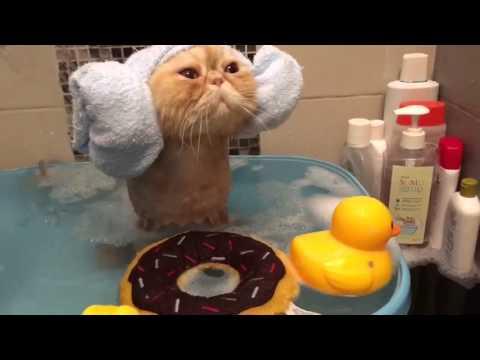 めちゃ可愛い猫の入浴シーン♪