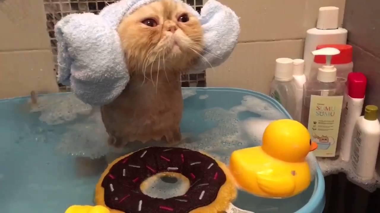 Látta már, hogyan zuhanyozik egy fülvédős macska?