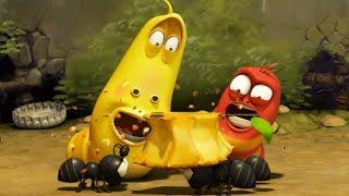 LARVA | Hormigas | 2017 Película Completa | Dibujos animados para niños