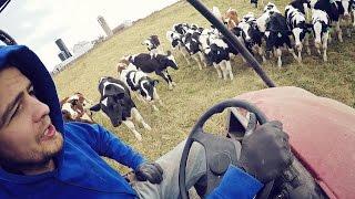 Healthy Calves!