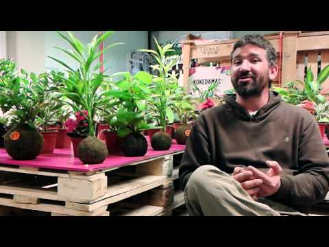 Producir Cambio - Kokedamas, Plantas sin macetas