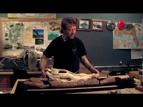 Professor David Schwimmer Discusses Deinosuchus