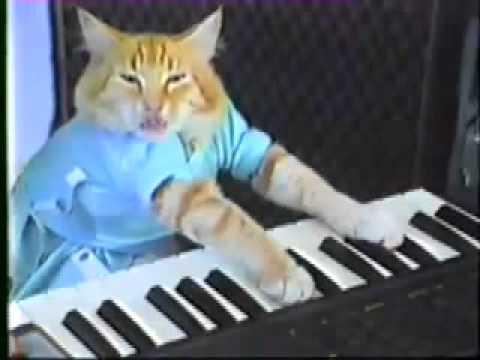 Kot Gra Na Keyboardzie