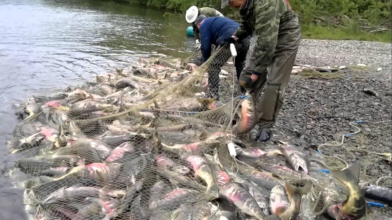 лососевая рыбалка на камчатке