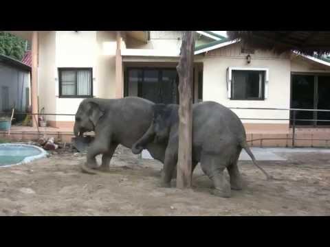 Baby Elephants - Hat Kai Bae, Thailand