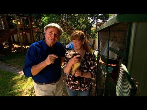 Better Homes And Gardens Dr Harry Devoted Wildlife