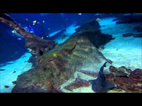 GoPro hero 3+ black edition rencontre avec les requins a marineland antibes